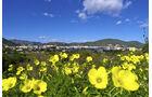Costa Blanca Blumenwelt