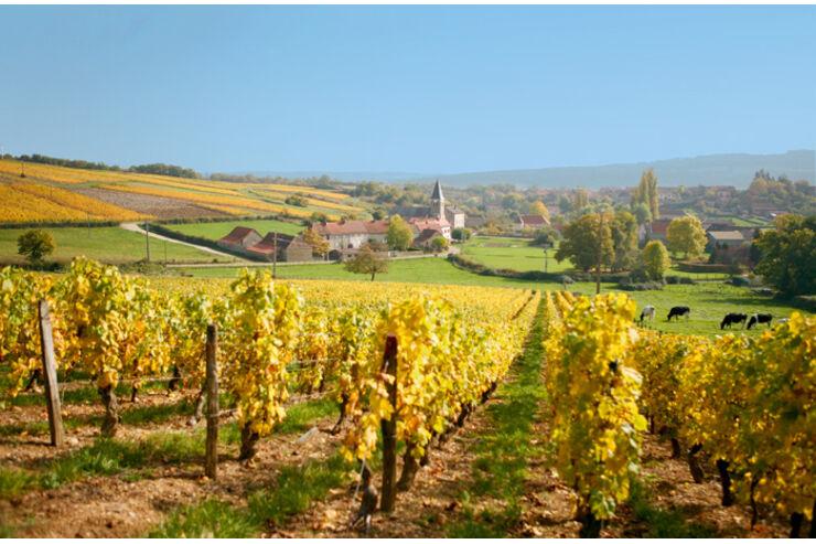 Reise-Tipp: Burgund