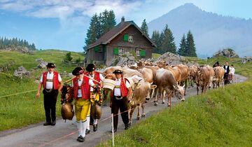 Traditionelle Alpfahrt auf die Schwägalp.