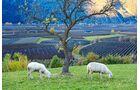 Vinschgau Weide in Tschengls